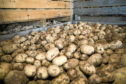 Potato stocks are up almost 25% on last season, according to AHDB