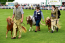 Council funding sought to help with the running of Turriff show