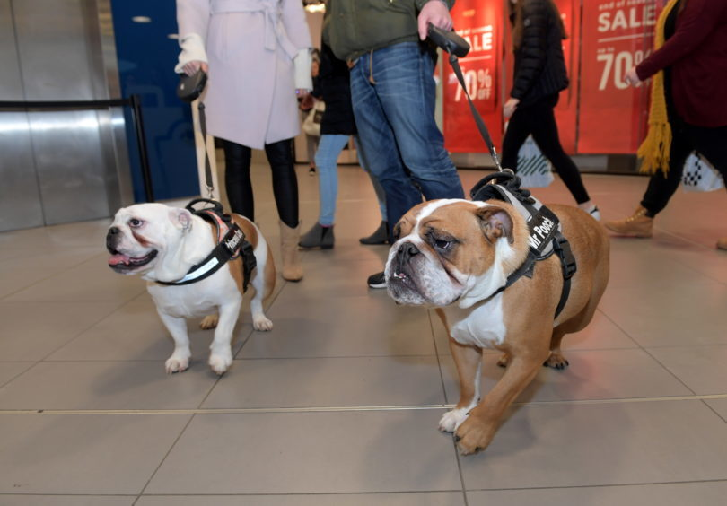 Legally Blonde dog auditions at the Bon Accord Centre. 15/02/18. Picture by KATH FLANNERY