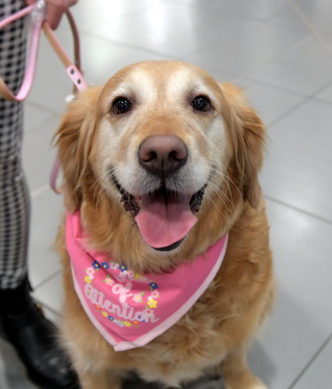 Legally Blonde dog auditions at the Bon Accord Centre. Pictured is Keira. 15/02/18. Picture by KATH FLANNERY