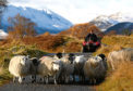 The sheep sector is particularly vulnerable.