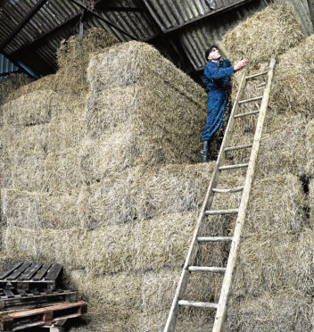 HSE has called for safer working practices at height and around livestock