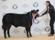 Craig Robertson with his champion heifer which sold for £7,800.
