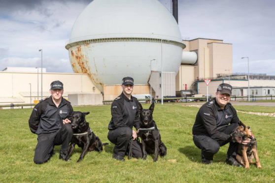 From left, meet Vader - head of the family; Tess, Vader's daughter and puppy Jaxx, Vader's grandson. All will be busy patrolling around the site.