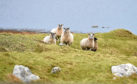 The SCF said the NFUS had a lack of understanding of crofting.