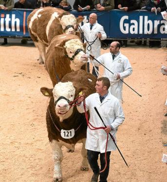 Stirling Bull Sales 2018
