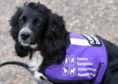 """Esther Gooch's assistance dog, a cocker spaniel called """"J"""", faced difficulties flying home from a holiday in Italy."""