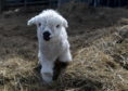 Doonies Farm have reopened for the season. Pictured is new lamb Daisy.