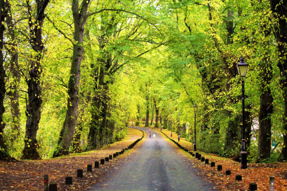 Autumn scene at  the Castle Avenue in Huntly. Photograph: Mairi Innes