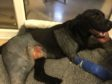 """Baxter was left """"smashed-up"""" following a hit and run incident last October."""