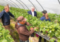 Rural Secretary Fergus Ewing is visiting fruit farms at East Scryne and Auchrennie near Carnoustie to discuss the impact of Brexit  on the seasonal non-UK workforce....pic shows Fergus Ewing (2nd from right) chatting to a worker with fruit farmer James Porter (left)...pic Paul Reid