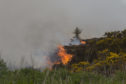 A large area of heathland and gorse was destroyed by the wildfire.