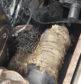 The burnt birds in the engine of Sean Fillingham's Audi Quattro.