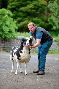 Mike Munro with a sheep from his Kinloch flock