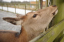 Two pregnant red deer hinds have been illegally killed