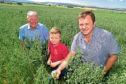 Three generations of the Webster family -  Willie, Frazer and Ian - in their award-winning field of Aspen spring oats.