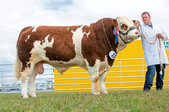 The MacPherson family's Simmental bull, shown by Garry Patterson, was champion of champions at Nairn Show.