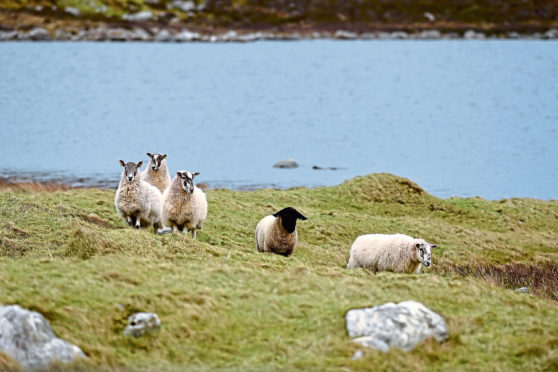 The report was commissioned by the Crofting Commission.