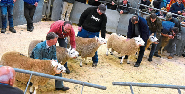 The meetings are taking place ahead of the autumn ram sales.