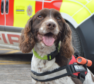 Diesel the dog is sent to disaster areas across the world to sniff our casualties trapped in collapsed buildings.