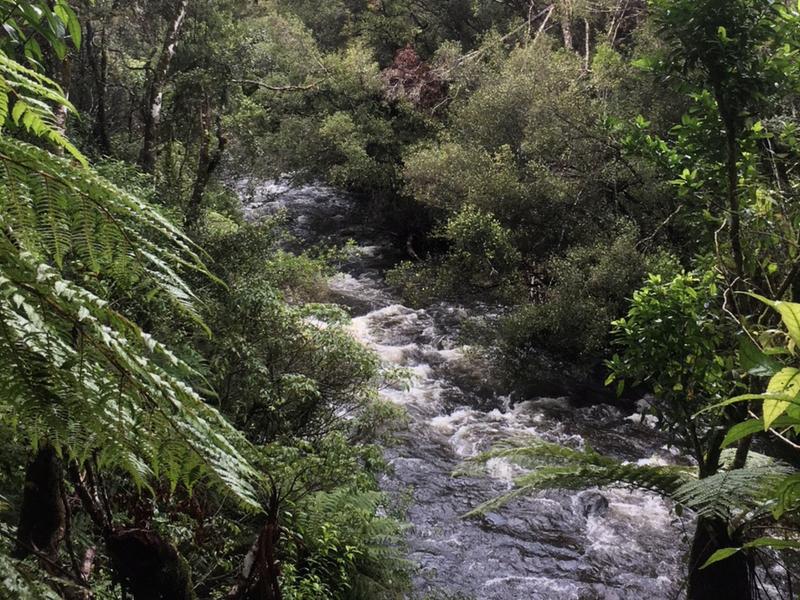New Zealand - Mangawhero Forest