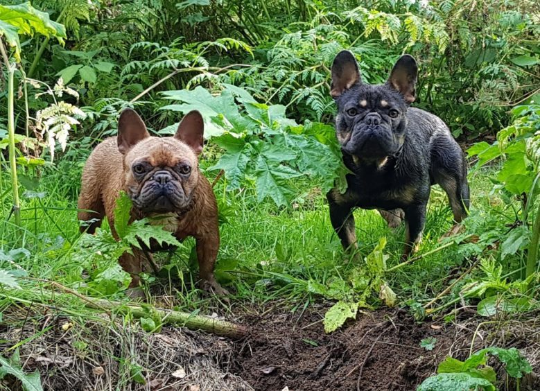 Quinn & Romeo, 1, from Whiteford