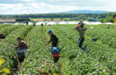 More than 9,000 migrant seasonal workers were needed on Scottish farms last year.