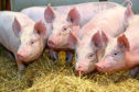 The survey found consumers did not realise how much pork was produced from intensive systems.