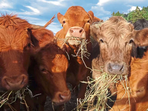 The new vaccine could provide a swifter response to FMD.