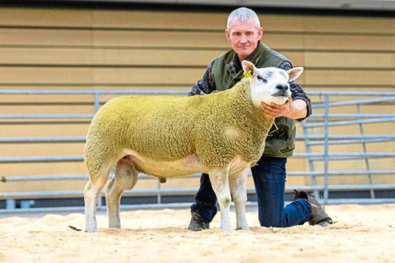 Rodney Blackhall with a Texel shearling ram which sold for 1,800gn for charity at the ANM ram sale.