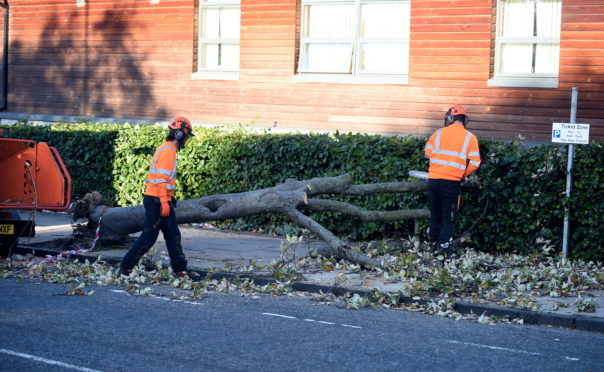 The fallen tree on Whinhill Road, Aberdeen this morning. Picture by Heather Fowlie.