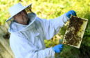 North East bee keeper Erling Watt.