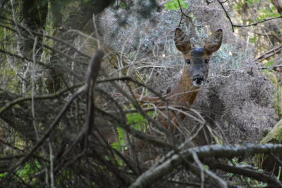Motorists have been warned to be vigilant of deer at the roadside in the darker nights.