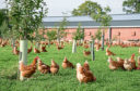 The association is launching a model contract for free range egg producers.