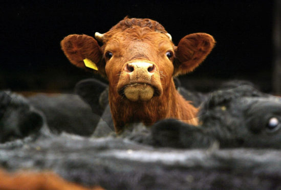 The first case of BSE in Scotland in over a decade has been confirmed. David Cheskin/PA