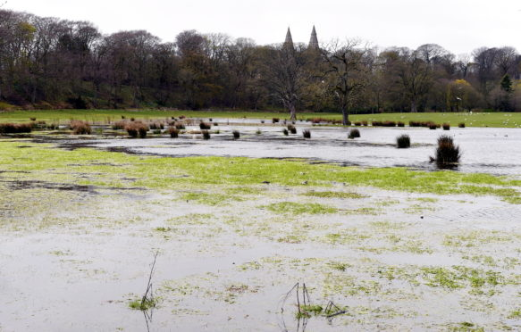 The wetlands at Seaton Park.