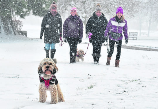 Dogs and their owners enjoy the snow in Aberdeen's Hazelhead park.