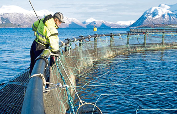 salmon farm    (Submitted)