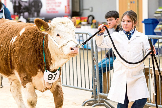 Stars of the Future calf show at Stirling Market
