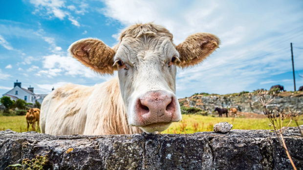 Dealing with unpredictable animals and dangerous machinery are among hazards on the farm.