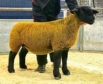 The 5,500gn gimmer from Birness.