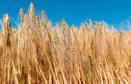 Work to improve barley yields landed Jamie Leslie the award.
