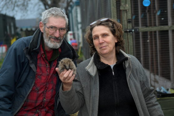 Pauline and Keith Marley with a wild hedgehog which was brought in to them with an infected leg. (Picture by Kath Flannery)