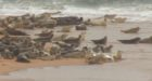 Calls have been made to better protect seals at a north-east estuary.