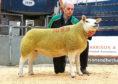 The 9,000gn in-lamb pedigree Texel female from Graham Morrison's Deveronvale flock.
