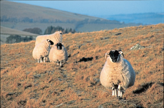 Sheep farmers are urged to remain vigilant for the disease.