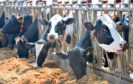 The study involved monitoring dairy cows on a farm in Essex.