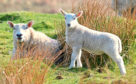 A new campaign urging dog owners to be responsible around livestock has been launched.