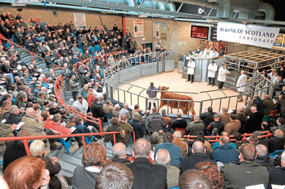 Prime cattle prices are down 4% on last year.