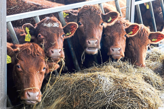 Turnover increased at the animal feed firm.